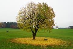 Ein Baum im Weiler Grimm hat sein Blätterkleid abgelegt.