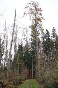 Der kahle Baum links ist ein beliebtes Habitat des Spechts.