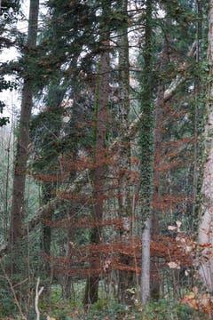Sturmwinde haben Spuren im Wald hinterlassen.