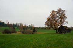 Die Landschaft öffnet sich wieder. Oberhalb eines Moorgebiets schmiegt sich ein Holzschuppen an einen majestätischen Baum.