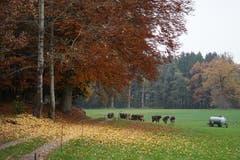 Der Wald trägt überall Herbstfarben. (Bilder: Sandro Büchler)