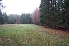 Auf dieser Waldlichtung ist die Chance gross, auf Rehe oder Feldhasen zu treffen.