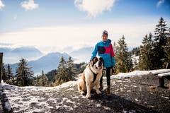 Mit den Bernhardinern auf einer Winterwanderung auf der Rigi. (Bild: Roger Grütter, 1. Dezember 2018)