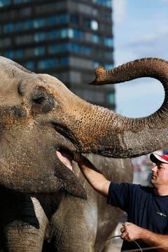 Die Elefanten gehen nächstes Jahr in Rente. (Bild: Stefan Kaiser / Neue ZZ)