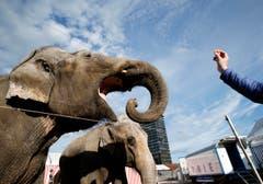 Nach den Aufführungen in Zug und Brunnen reist der Zikrus Knie noch ins Tessin. Danach ist Schluss mit den Elefanten-Nummern. (Bild: Stefan Kaiser / Neue ZZ)