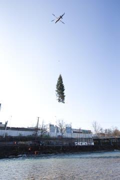 Eine Tanne fliegt durch die Luft. (Bild: Manuela Jans / Neue LZ)