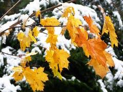 Gesehen auf dem Steinhauserberg: Herbst und Winter reichen sich die Hände. (Bild: Leserbild Josef Lustenberger)