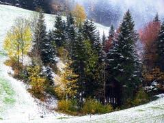Winterlicher Herbst auf dem Steinhuserberg (Bild: Leser Josef Lustenberger)