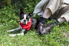 Ein Hund mit einem roten Schweizer Kreuz Halsband auf dem Rütli. (Bild: Keystone)