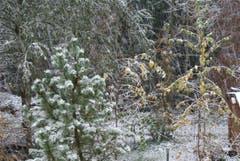 In Allenwinden im Kanton Zug hat heftiger Schneefall eingesetzt. (Bild: Leser Heiri Süess)