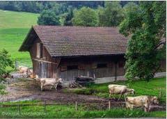 Only in Switzerland can cow bells wake you up at 6 am… (Nur in der Schweiz können dich Kuhglocke um 6:00 morgens aufwecken…) (Bild: marualvarezmorphy / Mexiko)