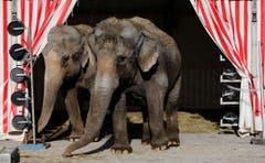 Die Zirkus-Elefanten sind bald nicht mehr in der Manege. (Bild: Stefan Kaiser / Neue ZZ)