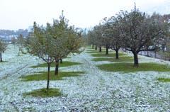 In Oberdorf schützen die Bäume die Wiese vor einer totalen Schneedecke. (Bild: Leserin Edith Pargger)
