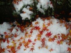 Beim Koloniespielplatz in Erstfeld. Schöne Natur nach dem ersten Schneefall – sieht aus wie dekoriert. (Bild: Leserbild Geni Wipfli)