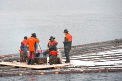 ... für die Forstarbeiter das Ende einer intensiven Arbeitsperiode. (Bild: Maria Schmid / Neue ZZ)