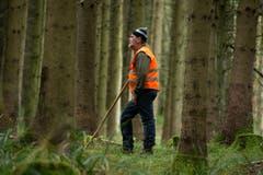 Jagd in Römerswil. Ein Standtreiber treibt das Wild auf die Jäger zu. (Bild: Dominik Wunderli / Neue LZ)