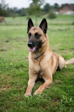 Hund Kiro (Bild: Corinne Glanzmann / Neue LZ)