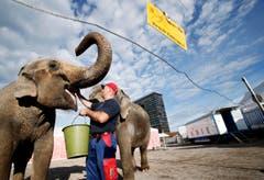 Der Zirkus Knie gastiert auf dem Stierenmarkt Areal in Zug. Im Bild: Karol Paluszkiewi. (Bild: Stefan Kaiser / Neue ZZ)