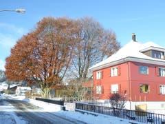 2-Familienhaus, Ton in Ton mit den 2 grossen Buchen, in Rickenbach. (Bild: Josef Habermacher)