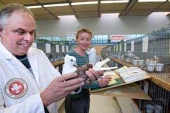 Juror Hansruedi Kunz und seine Frau Vreni verteilen den Tauben Noten. (Bild: Eveline Beerkircher / Neue LZ)