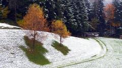 Da will wohl der Winter dem Herbst den Garaus machen, fotografiert auf dem Steinhuserberg. (Bild: Leser Josef Lustenberger)