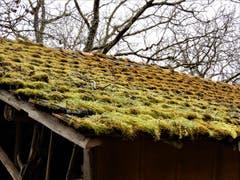 Eine kostengünstige und erst noch umweltfreundliche Isolation eines Scheunendachs. (Bild: Margrith Imhof-Röthlin)