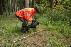 Robert Stocker ist Standtreiber. Er treibt das Wild auf die Jäger zu. (Bild: Dominik Wunderli / Neue LZ)
