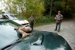 Die Tiere werden weggebracht. (Bild: Dominik Wunderli / Neue LZ)