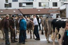 350 Kühe, Kälber und Pferde wurden vorgeführt. (Bild: Roger Zbinden / Neue ZZ)