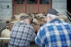 Zwei Züchter. Fachsimpeln sie über die gefallenen Preise? (Bild: Pius Amrein / Neue LZ)