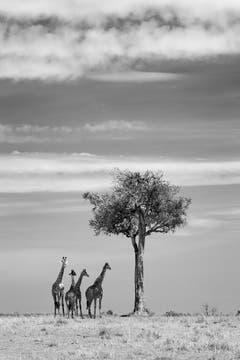 """Auf der Shortlist in der Kategorie """"Natur & Tiere"""" (Bild: Richard Garvey-Williams)"""