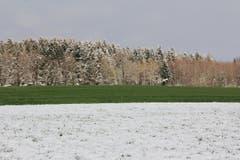 Wenn der Frühling mit dem Winter kämpft, aufgenommen in Neudorf. (Bild: Cécile Hüsler)