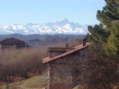 Haselnuss-Stauden im Piemont, mit herrlicher Aussicht in die Berge. (Bild: Fredi Meyer)
