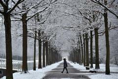 Eine winterliche Allee in Kassel (D). (Bild: EPA/UWE ZUCCHI)