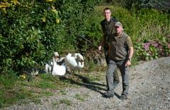 Eierstechen bei einem Schwannenest in Ennetbürgen: Unsere Zeitung begleitet die Wildhüter Fabian Bieri und Hubert Käslin bei ihrer Arbeit. (Bild: Corinne Glanzmann (Neue NZ))