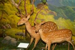 Impressionen einer Ausstellung über Nordkoreas typische Tierwelt. (Bild: Martin von den Driesch)