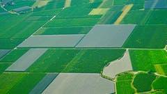 EinTal in dem jeder Zentimeter des Bodens für Obstkulturen genützt wird. (Bild: Stefan Kunz)