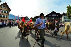 In Kerns fand am Samstag bei sehr grosser Publikumsbeteiligung der 6. Alpabzug statt. (Bild: Markus von Rotz)