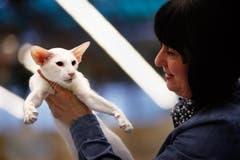Thea Friskovec bewertet eine weisse Siamesen-Katze. (Bild: Christof Borner-Keller / Neue ZZ)
