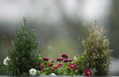 Eine Blumenkiste im Schneegestöber. (Bild: Keystone)