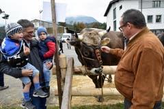 Politprominenz an der Viehschau: Während Nationalrat Karl Vogler seine Grosskindern in die Landwirtschaft einführt, erinnert sich auch Regierungsrat Paul Federer an Jugenderlebnisse auf dem Bauernhof. (Bild: Romano Cuonz)