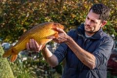 Der Tierarzt Ralph Knüsel hat sich auf die Behandlung von Fischen spezialisiert. (Bild: Boris Bürgisser)