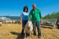 Sie sind täglich bei ihren Schafen. Alfons und Romy Betschart freuen sich, wenn es dann Mitte Juli auf die Charetalp geht. (Bild: Erhard Gick)
