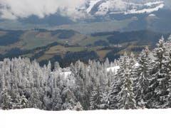 Oben weiss, unten grün: So präsentiert sich der Winter in der Zentralschweiz für jene, die in den Höhen des Napfgebiets unterwegs sind. (Bild: Leserbild Peter Helfenstein, Willisau)