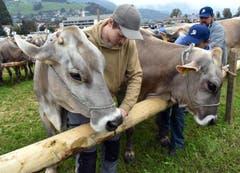 Schöne Kühe, stolze Besitzer. (Bild: Romano Cuonz)