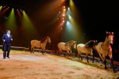 Fredy Knie jun. mit seinen Pferden. (Bild: Keystone)