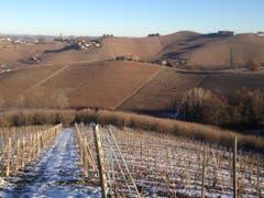 Die Rebstöcke im Piemont sind im Winterschlaf. (Bild: Fredi Meyer)
