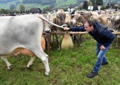 Er will es ganz genau wissen: Der Kampfrichter Beni Schmid aus Schüpfheim. (Bild: Romano Cuonz)