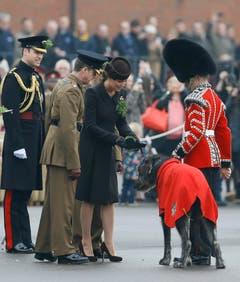 Zur Feier des irischen Schutzpatrons Sankt Patrick hat Herzogin Kate Soldaten des Regiments Irish Guards Sträusschen aus Kleeblättern überreicht. Auch das Maskottchen des Regiments, ein drei Jahre alter Irischer Wolfshund namens Domhnall, bekam ein Sträusschen. (Bild: Keystone)