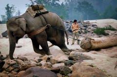 "Auf der Shortlist in der Kategorie ""Natur & Tiere"" (Bild: Wang Yizhong)"